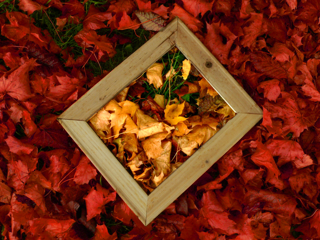 Framed Red And Gold Leaves