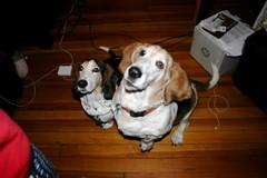 Clyde & Bacon beg