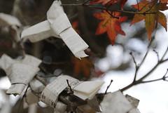 desideri sui rami (simoputz) Tags: winter tree japan albero inverno giappone rami simoputz