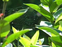 Spider by Mary M Peterson (mmp86) Tags: nature spider spiderwebs animalarchitecture