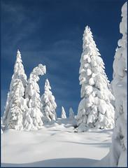 winter fairy tale... (parol) Tags: blue winter white snow backcountry skying scialpinismo onblue themoulinrouge naturesfinest blueribbonwinner 100faves 50faves 25faves abigfave platinumphoto anawesomeshot aplusphoto flickrenvy infinestyle megashot eliteimages naturewatcher theperfectphotog
