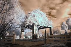 Arboretum Gazebo Infrared (vt335) Tags: lexington kentucky gazebo infrared d100 emozioni