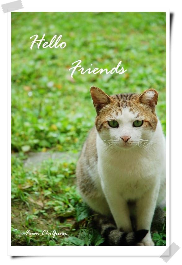 【貓季】Hello,friends.四月貓