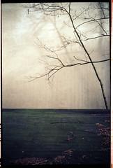 gestalt (natur) (miemo) Tags: travel shadow abstract tree berlin film 35mm germany europe fuji superia olympus minimal epson xa minimalism olympusxa v750