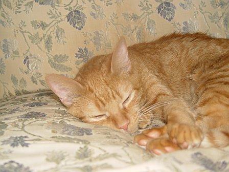 Molly Sleep