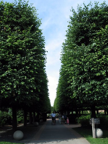 Tree path, summer