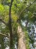 96.11.16竹崎鄉光華村茄苳風景區內的茄苳老樹DSCN3214