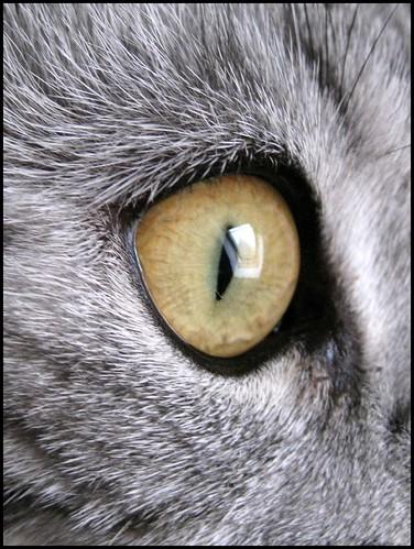 macro cats eye
