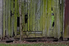 Barn Wall (ricko) Tags: wall wood tree rust rotten newburg indiana old barn boards
