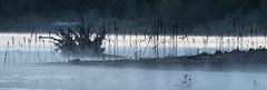 Shoreline (maytag97) Tags: maytag97 tamron 150 600 lake outdoor shoreline morning plant mist stump contrast shadow evening nature natural nikon d750