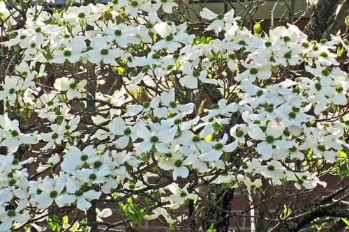 Spring In Mena 31
