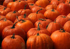 The Pumpkin Patch (nature55) Tags: autumn nature barn outdoors hiking pumpkins coffeshop naturesfinest nature55 mywinners worldbest theperfectphotographer hikingwithnicki