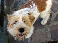 Diablo! 1 (*Tom [luckytom] ) Tags: cane tom diablo bianco stefano marrone alessandro ctm favcol luckytom