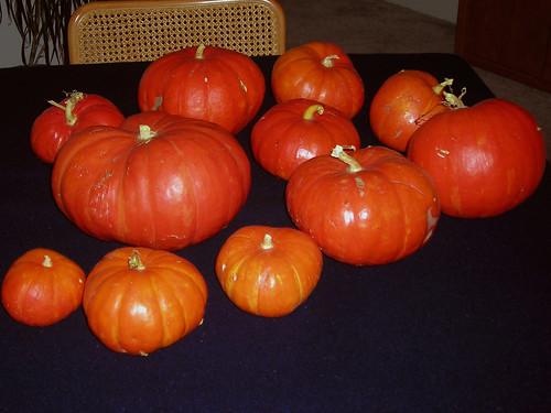 2007 Pumpkin Crop
