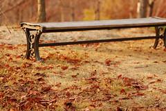 An autumn day (geckogenome) Tags: autumn brown