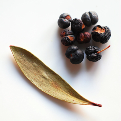 mountain pepper berry