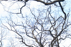 Trees (Anna DeLuna) Tags: road nyc trees winter sky white nature sig