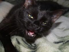 P9122405 (janek.ojasaar) Tags: cat jinx
