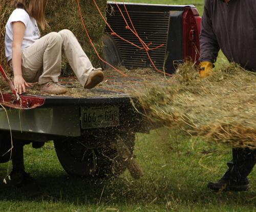 hay.everybody