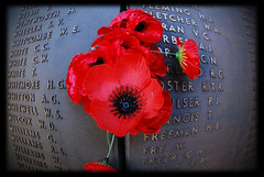 Red Poppies n 1 (Commemorating ANZAC Day) (heritagefutures) Tags: red copyright memorial war shrine australian donkey australia blumen nsw poppies canberra remembranceday hr thumbsup remembrance 2008 warmemorial simpson gallipoli dirk allrightsreserved anzac flanders anzacday mohn australianwarmemorial shrineofremembrance redpoppies spennemann heritagefutures dirkhrspennemann copyrightdirkhrspennemann ausphoto