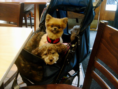 3 dogs in a baby carriage