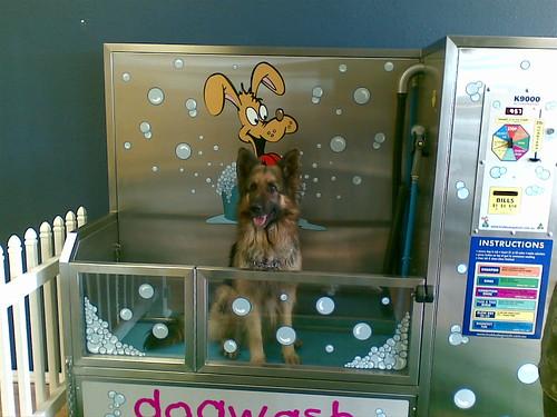 Tmc pet vending solutions enews k9000 dog wash k9000 dog wash solutioingenieria Choice Image