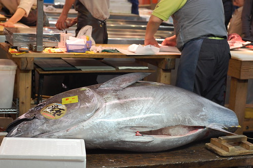 It Turns Out Tuna Are Huge