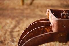 Erpice (loker) Tags: tractor nature antique farm natura campagna antiquariato depoca semina trattore macchine vigneto forestale frutteto contadino giardinaggio cassone irrigazione forwarder agricolo macchinedepoca rimorchi erpice orticoltura agricoltore coltura antiquefarm stoccaggio mietitrebbie rotopresse arboricoltura falciatrici spandiconcime antiquariatoagricolo fieniazione aratrici erpici mietitrici stoppiatori vendemmiatrici esboscatori segaacatena