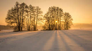 Golden winter light