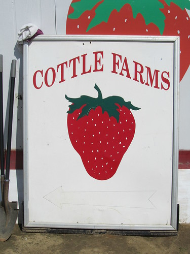 strawberry picking at cottle farms