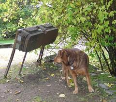 Aliens, examining a dog - Marsmenschen beim Betrachten eines Hundes -    (raymond_zoller) Tags: dog green vert aliens hund pies grn pas zielony verdure     marsmenschen   raymondzoller
