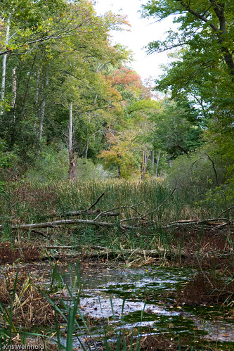 Jamestown Island Marsh