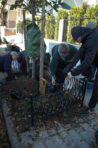 Tree Pit Gardening