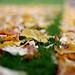 Autumn At 1.4 by bonamynorman