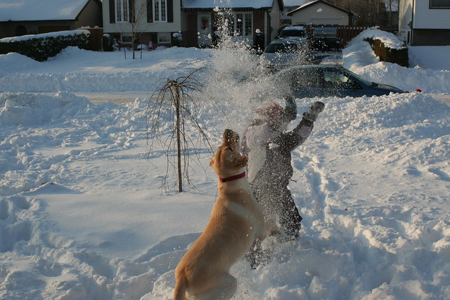 Dog and Girl Snow Fountain
