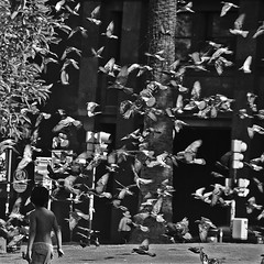 Fly Away (Discaciate) Tags: plaza boy blackandwhite bw southamerica argentina birds d50 children square fly flying buenosaires nikon pigeon dove streetphotography squareformat plazademayo decisivemoment cotcmostfavorited discaciate