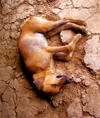 Parched Pooch (sebabisan) Tags: texture dogs animals sleep dirt tone cracked perrito amazonas