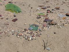 IMG_0670 (aloveletteraway ) Tags: beach fortfunston