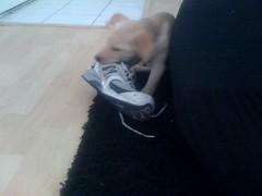More shoe