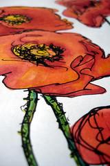 Poppies - 02 -