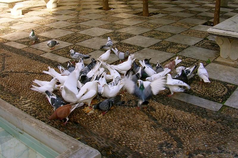birds in a checkered square in Córdoba