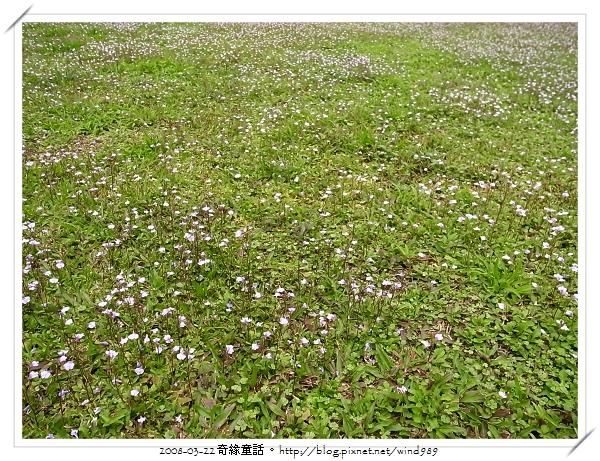 R0013270通泉草