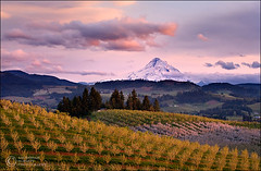 Hood River Valley Sunset (Zack Schnepf) Tags: sunset mountain snow beautiful beauty field oregon rural landscape spring warm pastel dream peak mount pasture pear hood zack capped hoodriver orchards schnepf