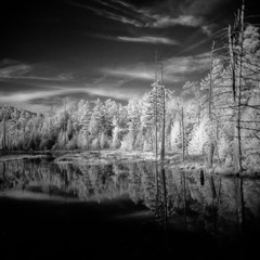Infrared Beaver Pond (eye of wally) Tags: ir holga adirondacks infrared holga120n