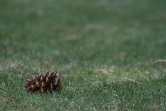 IMG_0199 (vequero_1) Tags: grass pinecone foreground