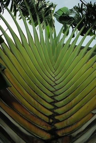 Plant, big plant