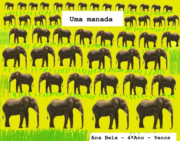 None coletivo Ana Bela