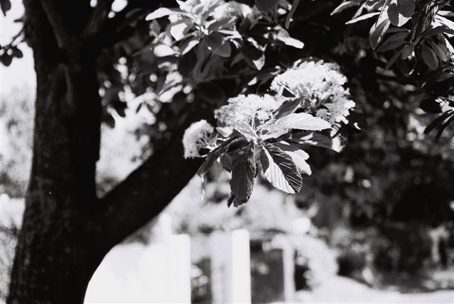 BW Tree (Small)