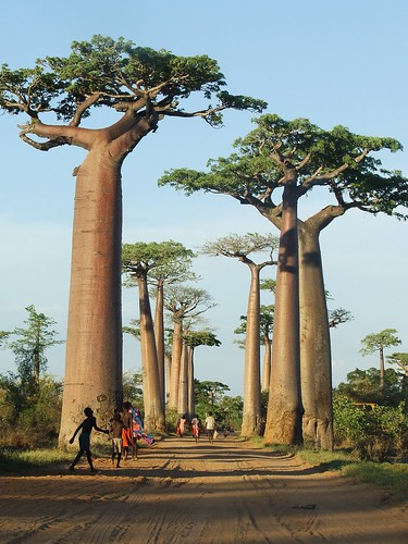 Baobab Alley with people, Madagascar