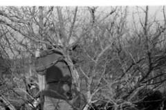 HP5B+0045 (fridayn) Tags: stlouis demolition implosion checkerdome stlouisarena 2271999